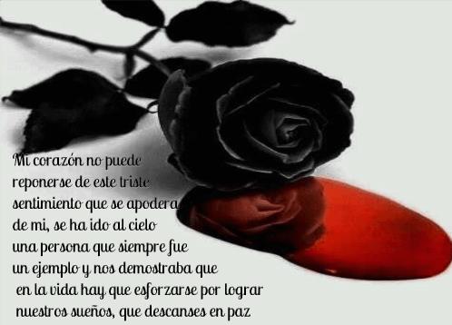 fotos-de-flores-negras-de-luto-con-sangre