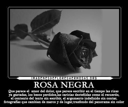 Imagenes De Rosas Negras Con Frases De Amor Heeldownvotedinfo