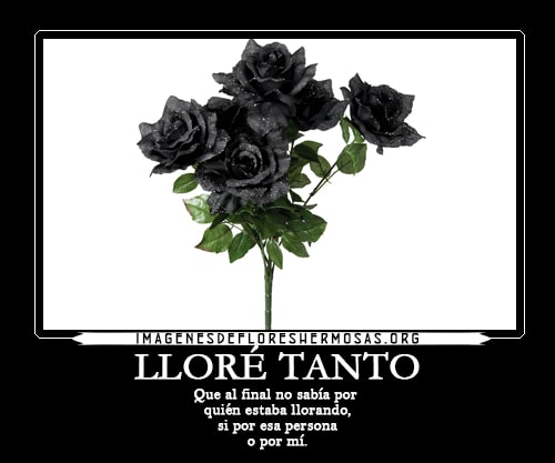 descargar imagenes de rosas negras con frases