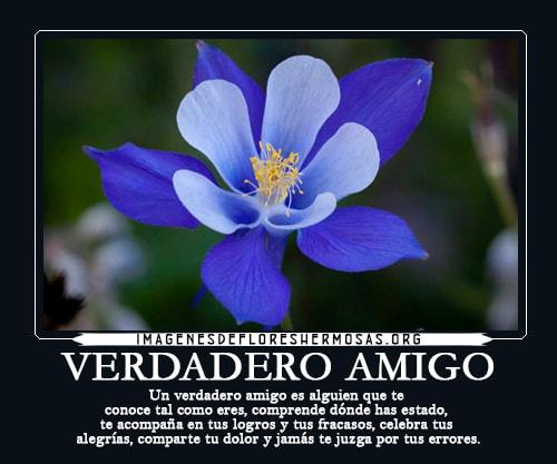 flores con frases bonitas de amistad