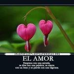Imágenes De Flores Con Frases Bonitas Para Compartir