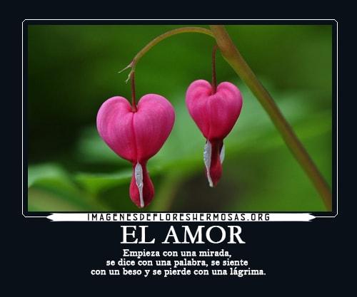 flores con frases bonitas de amor