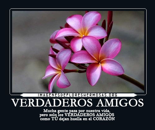 flores con frases bonitas para amigos