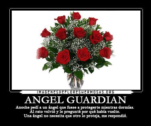 imagenes de rosas con frases bonitas