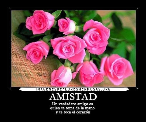 imagenes de rosas con frases de amistad