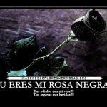 Preciosas Imágenes De Rosas Negras Con Frases De Amor Eterno