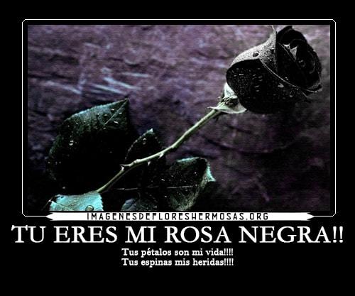 imagenes de rosas negras con frases de amor