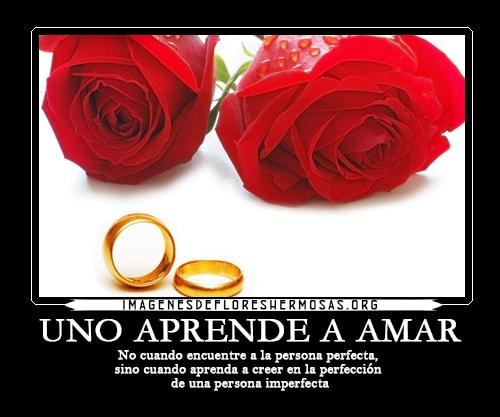 imagenes de rosas rojas con frases de amor