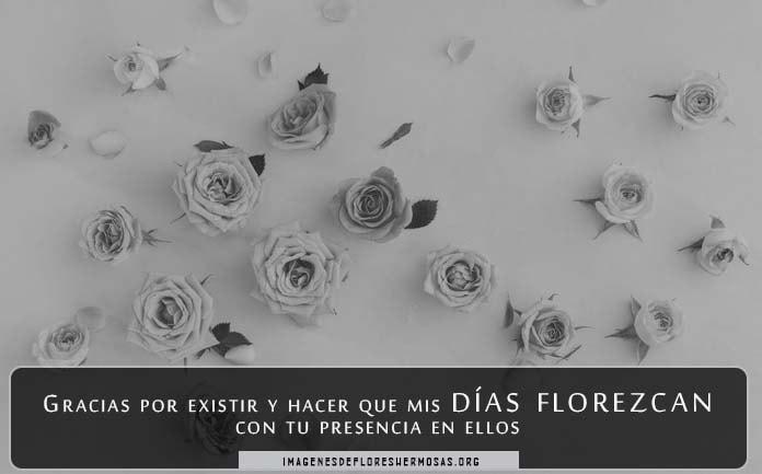 Descargar Imágenes De Rosas Con Frases Cortas De Amor