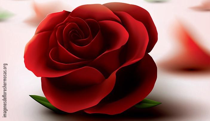 Imágenes de rosas bonitas