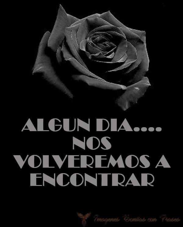 Imágenes de rosas negras con frases