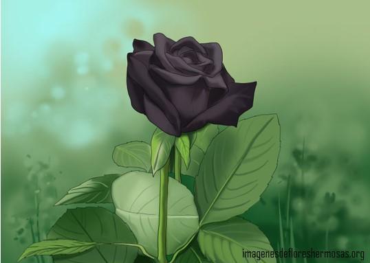 Imágenes de rosas negras para descargar