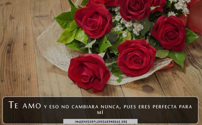 descargar imágenes de rosas rojas