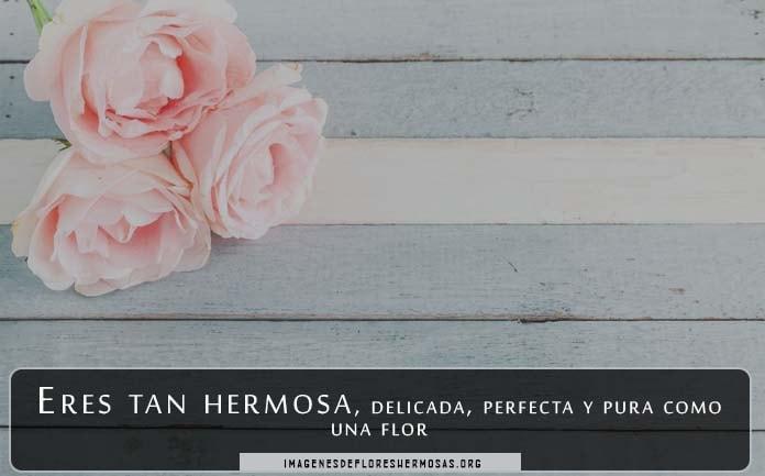descargar imágenes de rosas