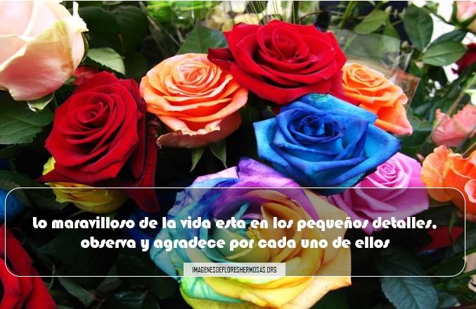 Imágenes De Rosas Con Frases Para Perfil De Facebook