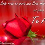 Preciosas Imágenes De Rosas Con Frases Románticas De Amor