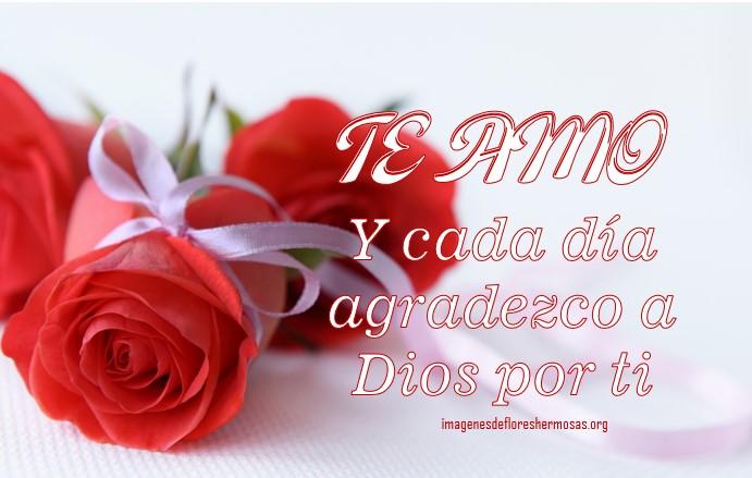 Imágenes de rosas hermosas para decir te amo