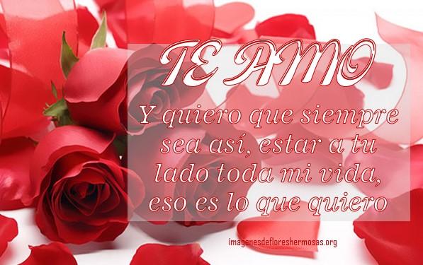 imágenes de rosas para decir te amo