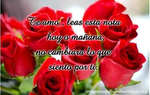 imágenes de rosas rojas con frases románticas