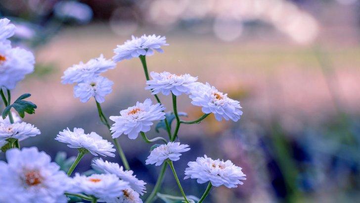 Imágenes De Flores Bonitas Para Fondo De Pantalla