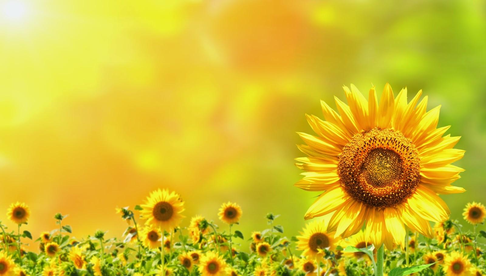 Fondos De Pantalla De Flores Hermosas Para Fondo Celular: Imágenes De Flores Bonitas Para Fondo De Pantalla