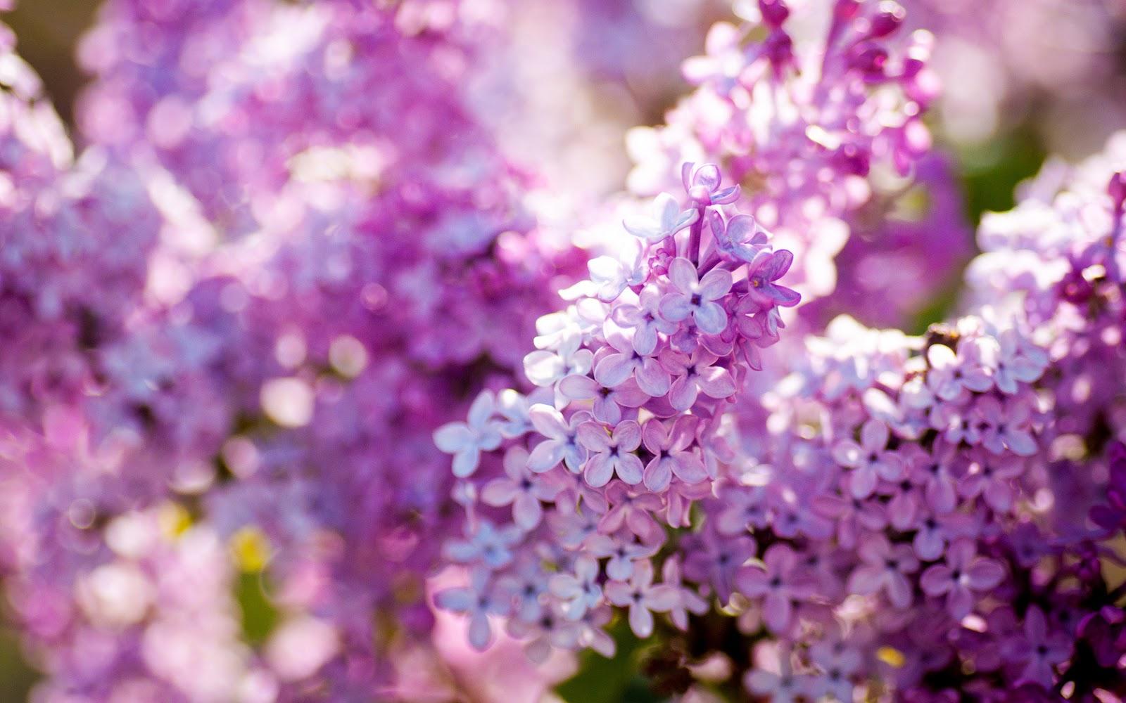 imagenes de flores bonitas para fondo de pantalla