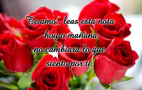 rosas rojas con mensajes de amor