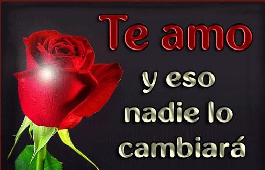 rosas rojas con frases de te amo