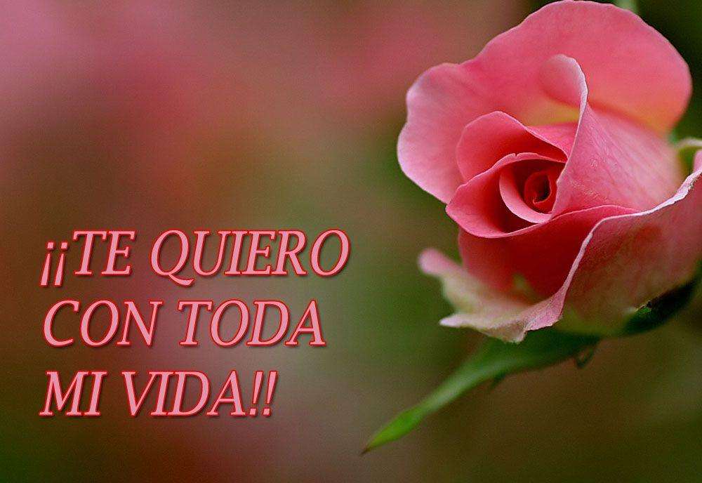 rosa te amo con mi vida