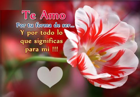 flores con mensajes de amor