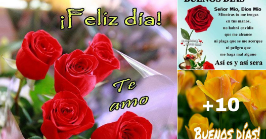 rosas con mensajes de buenos dias